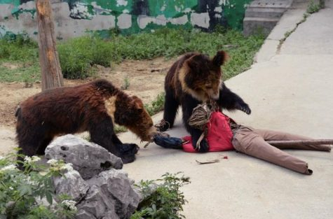 How to survive a bear attack (and more!)